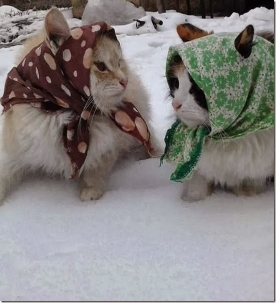 funny-animals-cute-034