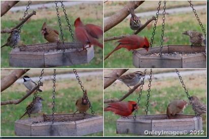 Dec birds collage1