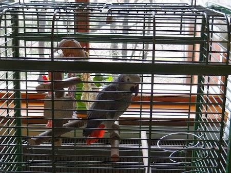 02. Papagalul Fane.JPG