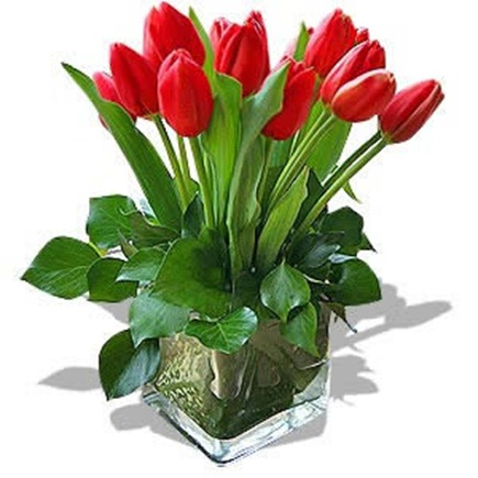 tulipas_vermelhas