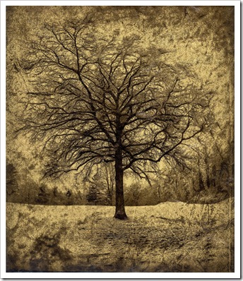 Dan_Burkholder_Tree_in_April_Snow_Catskills_Sm