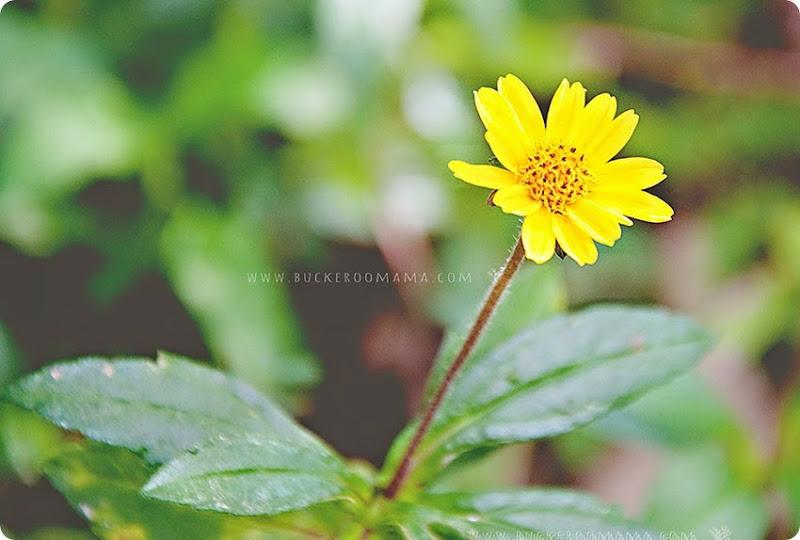 Wild-flower-(1)