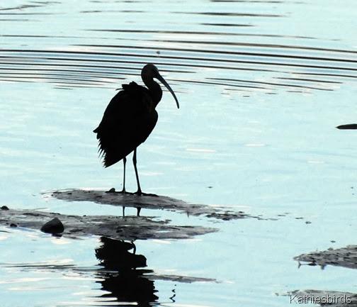 2. ibis-kab