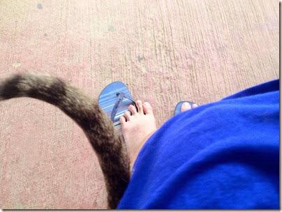 Bus Waiting X Catty Purring: Sunday Lazing