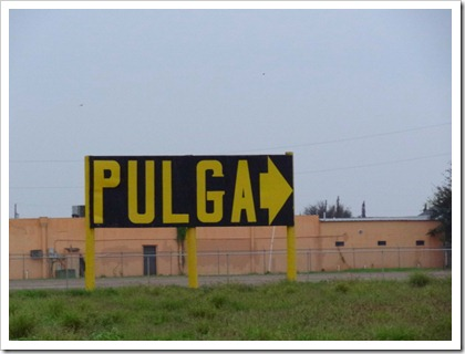 pulga sign