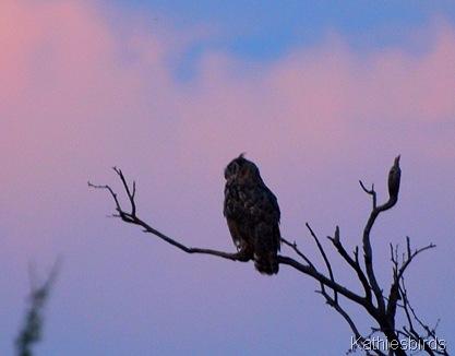 9. GH owl-kab