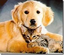 Cronograma de noviembre de esterilizaciones quirúrgicas gratuitas para perros y gatos
