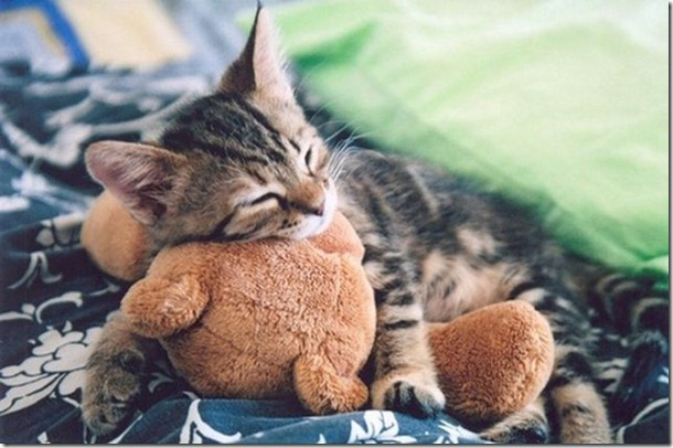 cats-stuffed-animals-17
