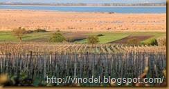 Влияние погодных условий на рост винограда
