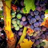 mallorca-wine-express-07.jpg