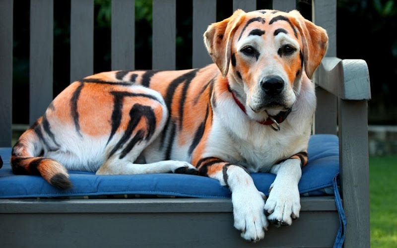 Dog-Tiger-Painting