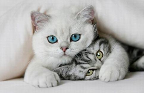 Cute-Kittens-640x414