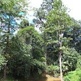 写真3 アカシアプランテーション内の河川 / Photo3 A creek runs through acacia plantation.