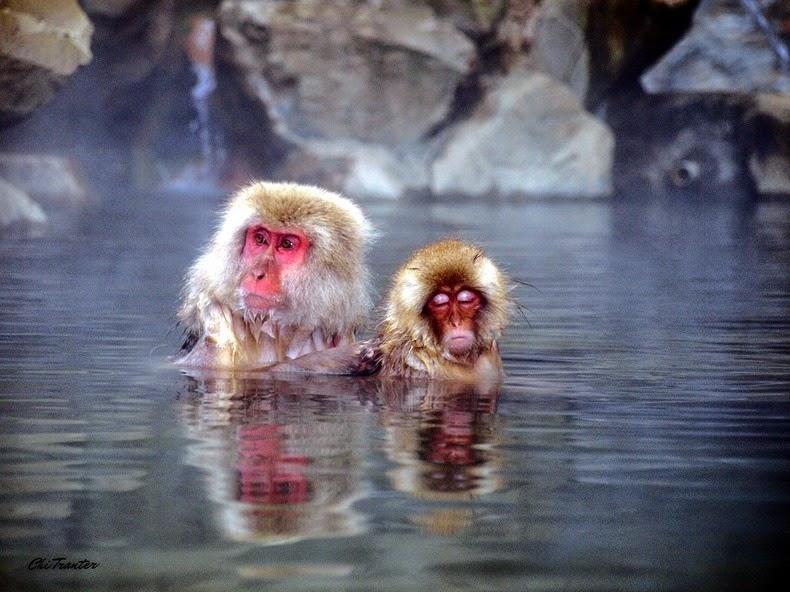 snow-monkeys-jigokudani-3