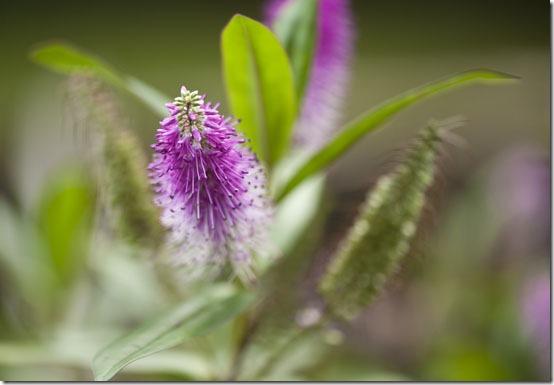 macro flowers01