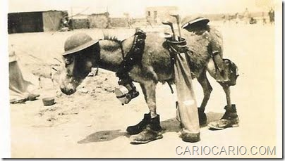 Fotos engraçadas da Segunda Guerra Mundial (2)
