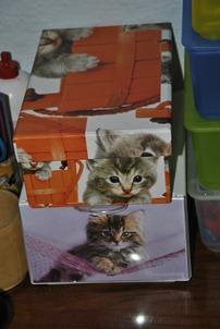 cat 020