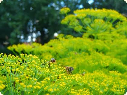 Dild og blomsterbier i fri dans