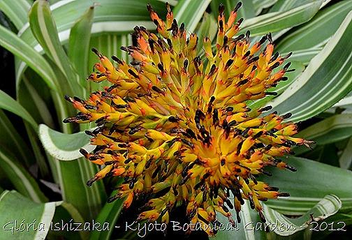 Glória Ishizaka -   Kyoto Botanical Garden 2012 - 13