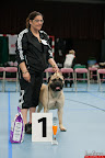 20130510-Bullmastiff-Worldcup-0687.jpg