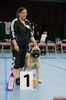 20130510-Bullmastiff-Worldcup-0687.jpg
