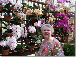 Joy, orchids