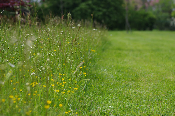 """La bordure du """"pré entomologique"""" le 20 mai 2012. Les Hautes-Lisières (Rouvres, 28). Photo : J.-M. Gayman"""