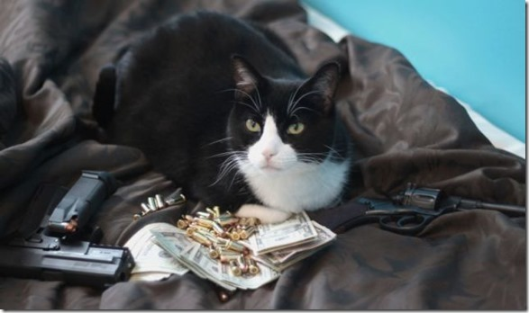 rich-wealthy-cats-15