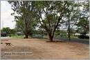 _P6A2047_road_mudumalai_bandipur_sanctuary