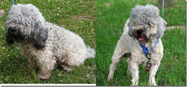 Animais Antes e Depois do Resgate (18)