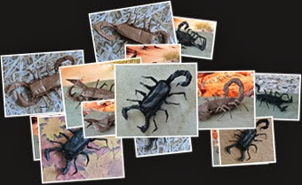View Origami Glassine Scorpion