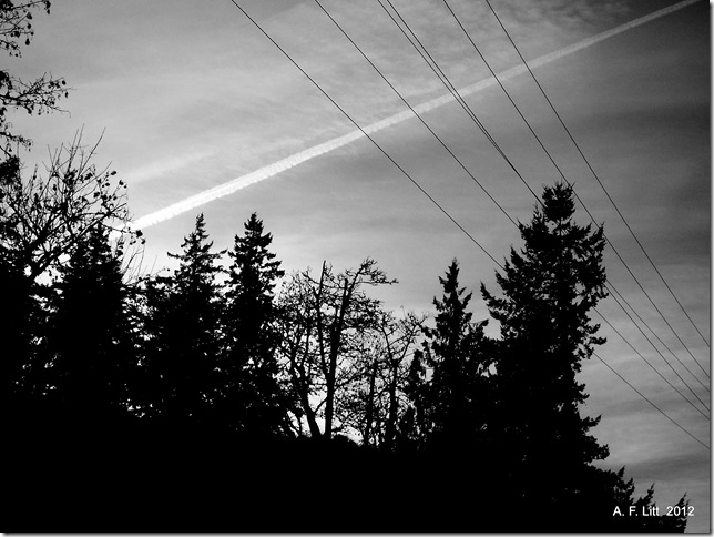 Springwater Trail.  Gresham, Oregon.  December 1, 2011.  Photo of the Day, April 2, 2012.