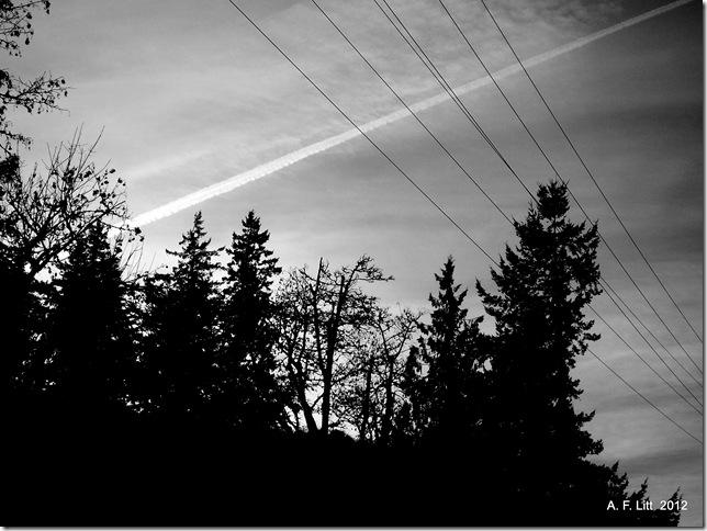 Springwater Trail.  Gresham, Oregon.  December 1, 2011.  Photo of the Day, April 2, 2012.