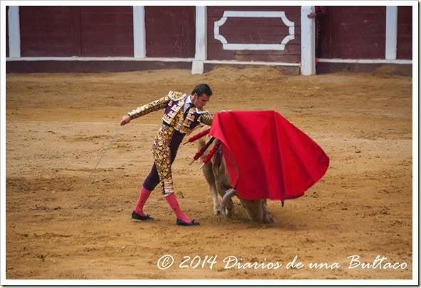 Toros 2014 (1)-40