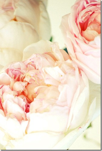 peonies via interest 2
