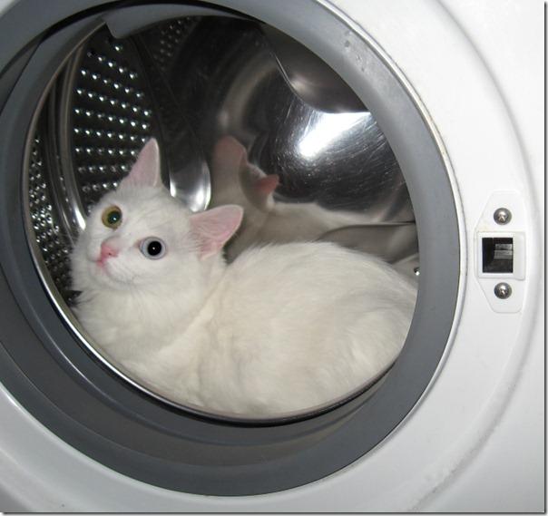 gatos lavadora (5)
