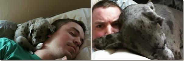 Antes e Depois de Animais de Estimação (3)