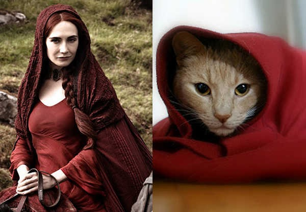 E se os personagens de Game of Thrones fossem gatos 4