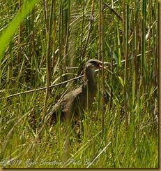 Allens Pond _ROT4719 NIKON D3S June 06, 2011