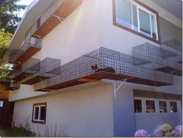 awesome-pet-owners-1
