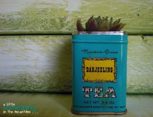 Tea Tin Planters small zoom