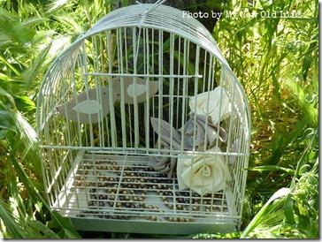 gabbietta rose e uccellini 5