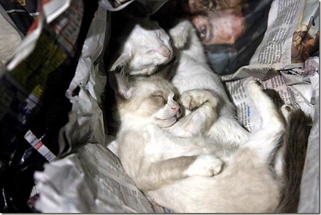 gatos_dalva