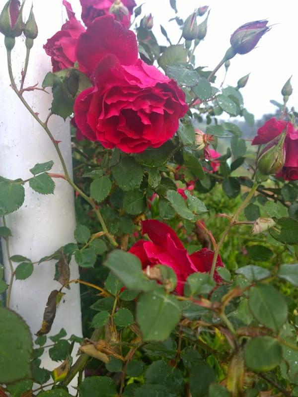 my garden oct 2014 (19)