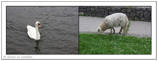 Wildlife at Llyn Padarn Llanberis