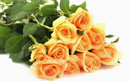 bunch_roses_apricot