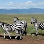 Zebras im Ngorongorokrater © Foto: Ulrike Pârvu | Outback Africa Erlebnisreisen