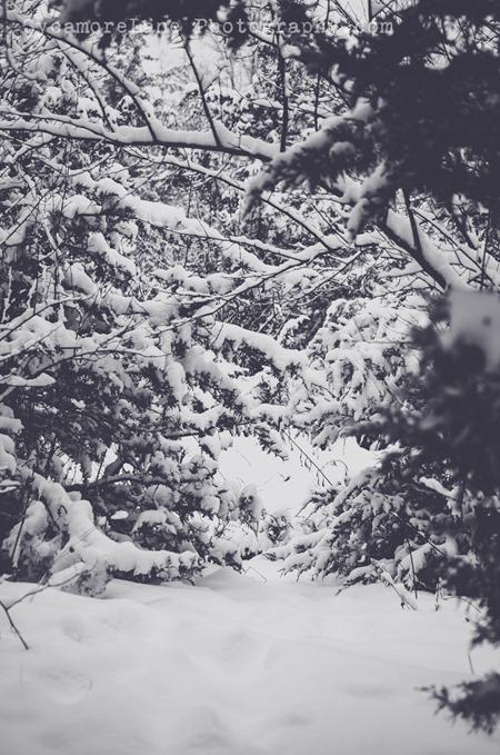 SycamoreLane Photography-116