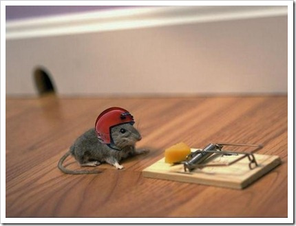 Courageous mouse and mouse trap