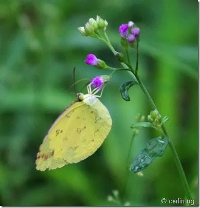hill grass yellow